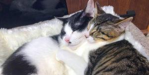 ダクタリ動物病院八尾 愛猫