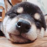 三笠先生の愛犬